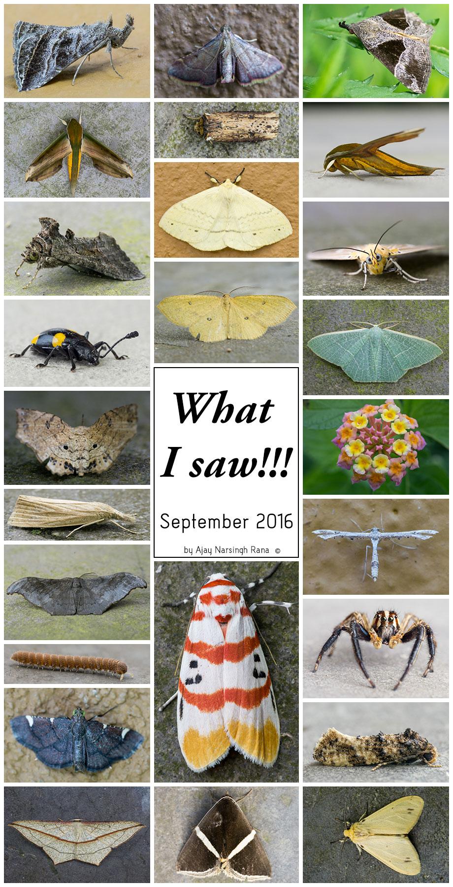 what i saw september 2016
