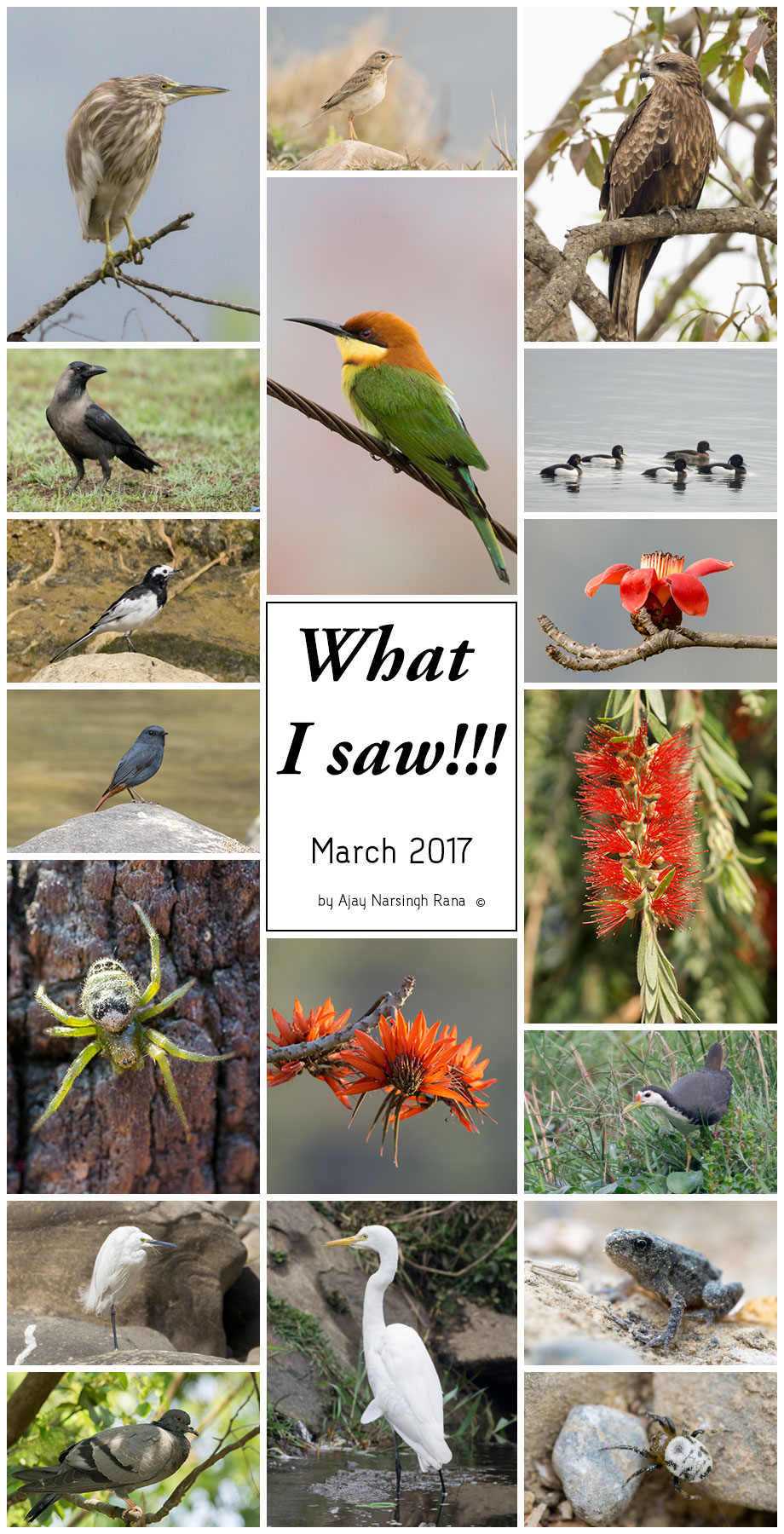 What i saw March 2017