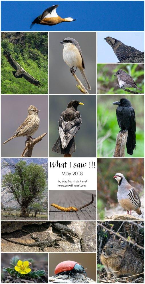 what i saw, wildlife in nepal, wildlife, nepal, bird, birds of nepal, monthly segment, nepal, macro, macro in nepal, wildlife photography in nepal, wildlife photography, wildlife blog, blog