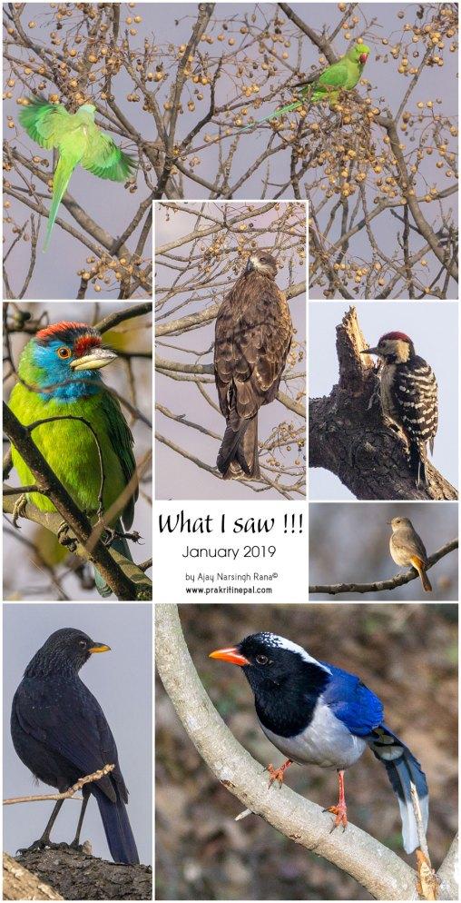 Prakriti-Nepal_What-i-saw-in-January-2019
