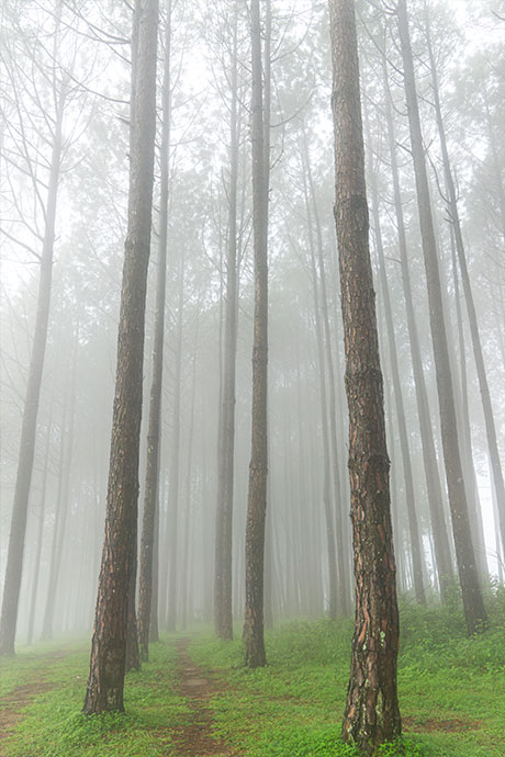 Fog-in-the-community-forest-Kusma