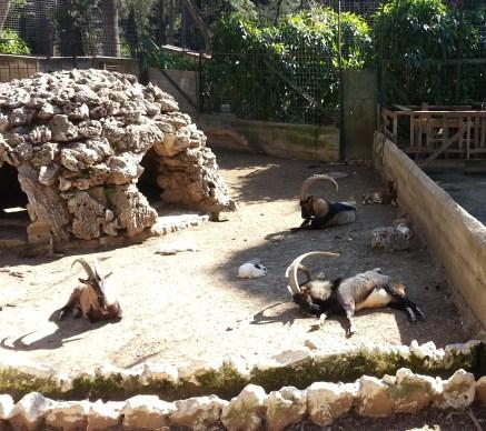 Εθνικός Κήπος ζώα