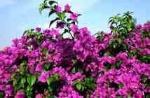 Ημερολόγιο κήπου: οι εργασίες που κάνουμε στον κήπο τον Ιούνιο