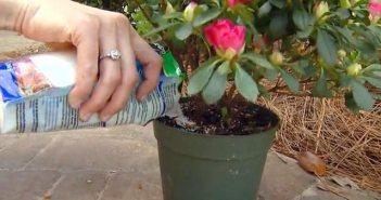 Κρύσταλλοι αποθήκευσης νερού - χρήση