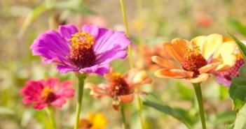 Ημερολόγιο κήπου - Αύγουστος