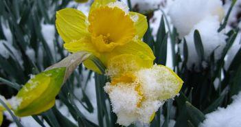 κηπος χειμωνας
