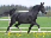 horse-08