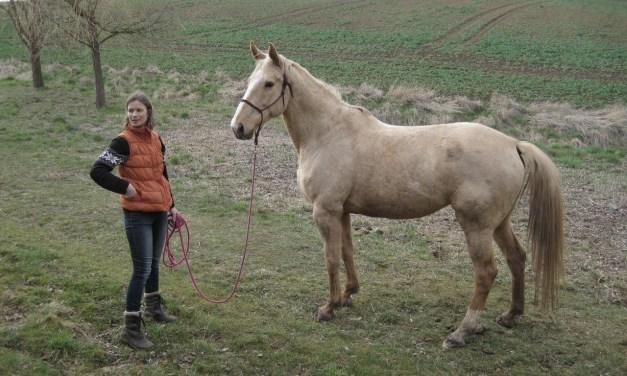 O koních, psech… a těch bytostech na druhém konci vodítka