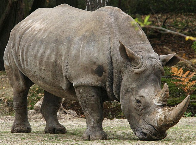 jenis jensi fauna di indonesia