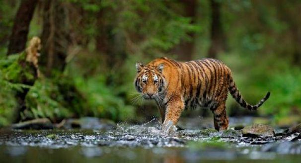 harimau sumatra, Flora dan Fauna di Indonesia