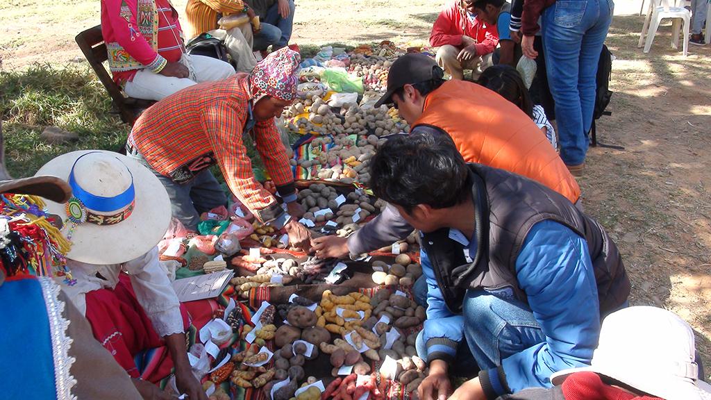 Bolivia: Fiesta de semillas de Pocona fue reconocida en ley municipal