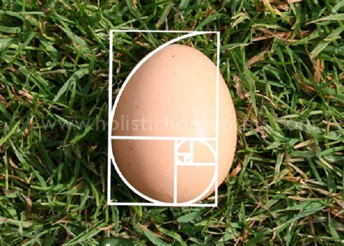 egg-golden-spiral-pratica-bioenergetica