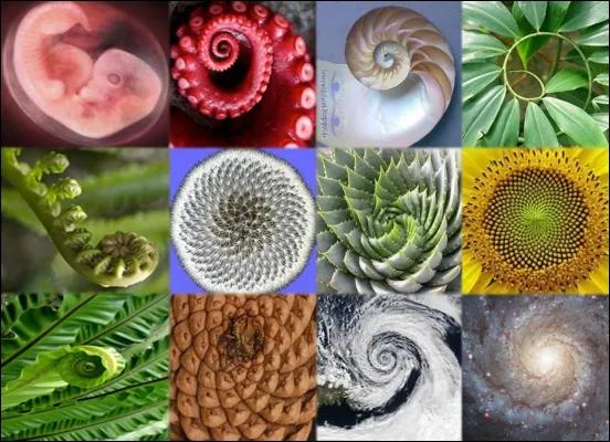spirali-naturali-pratica-bioenergetica