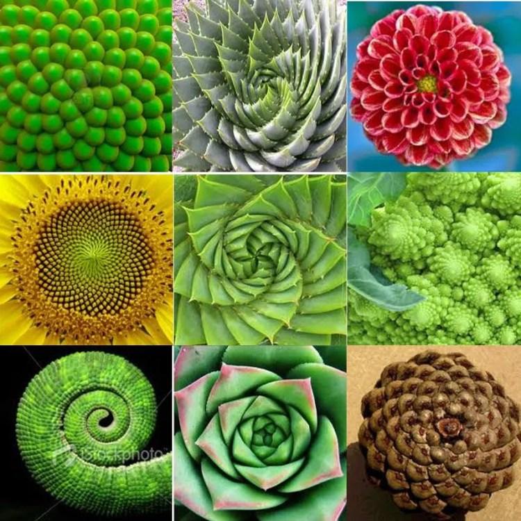 spirali-vegetali-pratica-bioenergetica