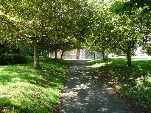 Avenue of medlars in Totnes churchyard
