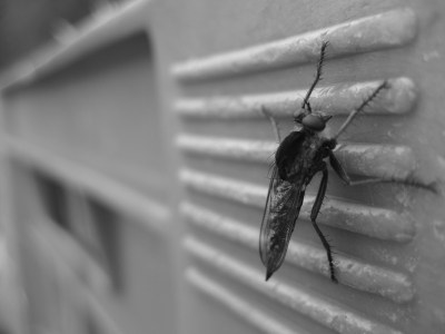 Natural ways to keep your home bug free this monsoon