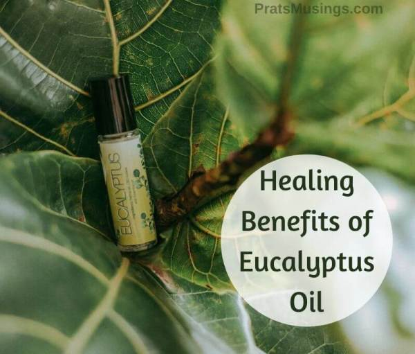 Healing Benefits of Eucalyptus Oil