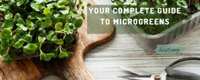 Your complete guide to Microgreens