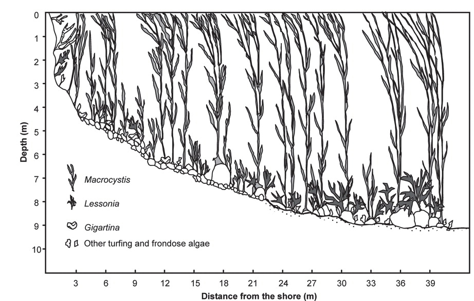Forest Resources Diagram. remote sensing innovations