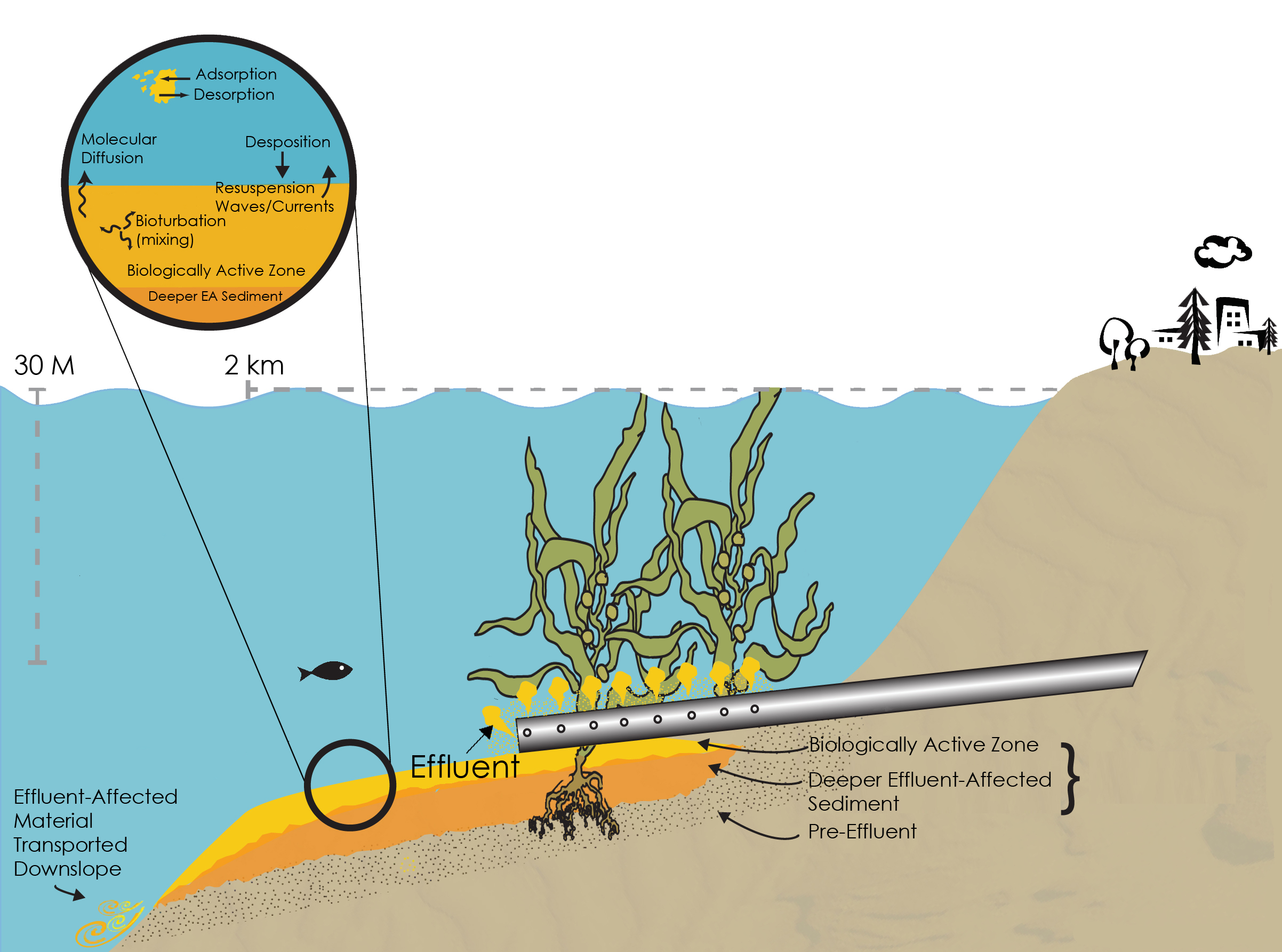 kelp forest diagram 1978 international scout ii wiring palos verdes shelf superfund site
