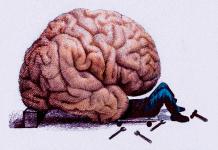 altruismo, altruista, altruistas, ambiente escolar, ambiente laboral, cerebro, colectividad, convicencia, convivir, cooperacion, cultivar, cultivo, emocional, genialidad, hermandad, hombre en sociedad, humanidad, inteligencia, Inteligencia Emocional, mental, mente, pensamientos, pensar, pensar en otros, psicóloga, psicólogas, psicología, psicólogo, psicólogos, psiquiatra, razonar, relaciones interpersonales, relaciones intrapersonales, relaciones sociales, salud mental, sociales, Sociedad