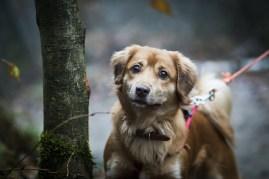 przydatne-komendy-fotografowanie-psow-blog-psach-12