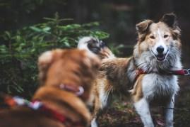 przydatne-komendy-fotografowanie-psow-blog-psach-14