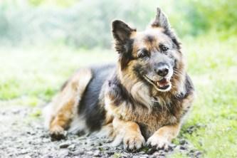przydatne-komendy-fotografowanie-psow-blog-psach-34