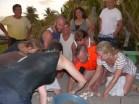 Burying turtle eggs