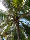 The view from our hammock