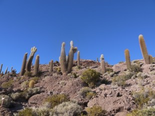 Salar_de_Uyuni_Fish_Island_Bolivia.JPG