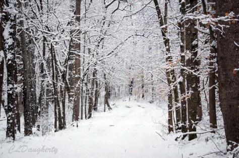 Cave spring lane snowy