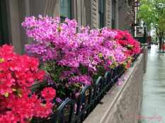 Spring flowers in NYC