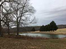 Oasis pond 2