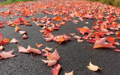 An Autumn Listening Soul Pause