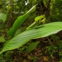 Where Do Praying Mantis Live? Praying Mantis Habitat & Distribution