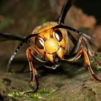 What Eats Praying Mantis? – Praying Mantis Predators