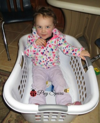 ladybug and the laundry basket aka boat or tub