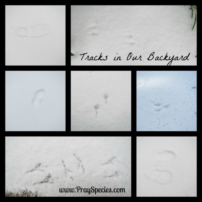 snowy day _ tracks in our backyard
