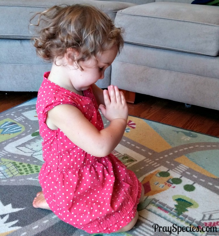 Ladybug in prayer for others around the world give your child the world
