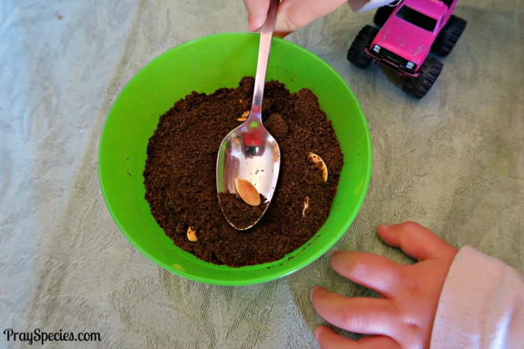 pumpkin-seeds-in-the-coffee-grounds-mgt