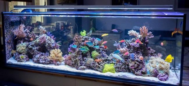 аквариум с экзотическими рыбками