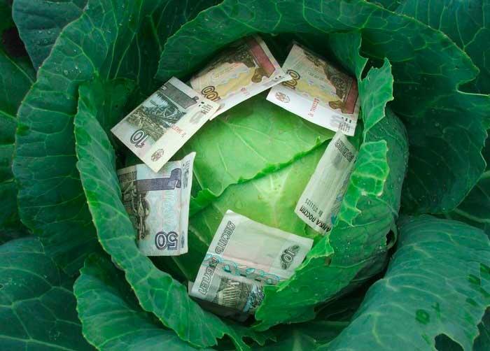 капуста с деньгами