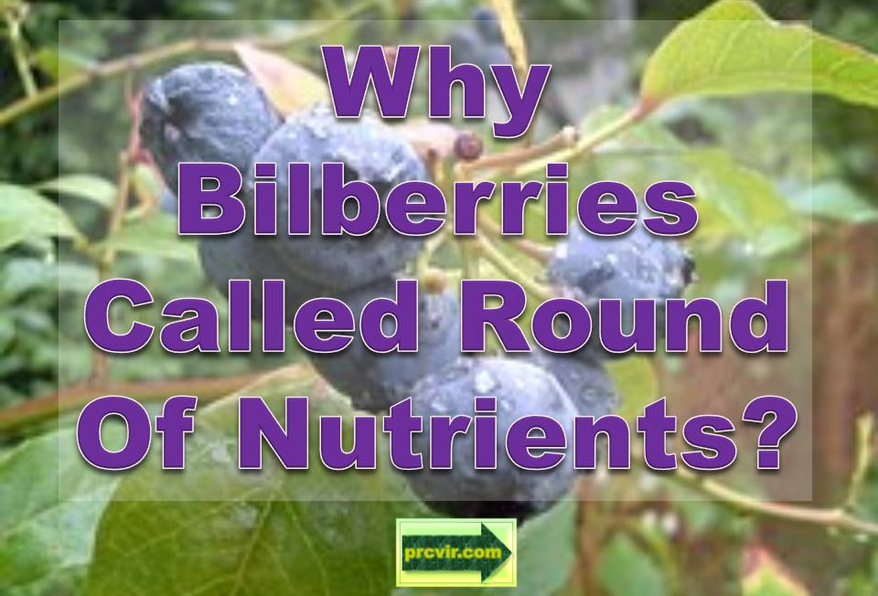 bilberries_nutrients