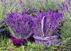 lavender treatment recipes