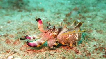 Voici l'animal qui change le plus vite de couleur au monde !