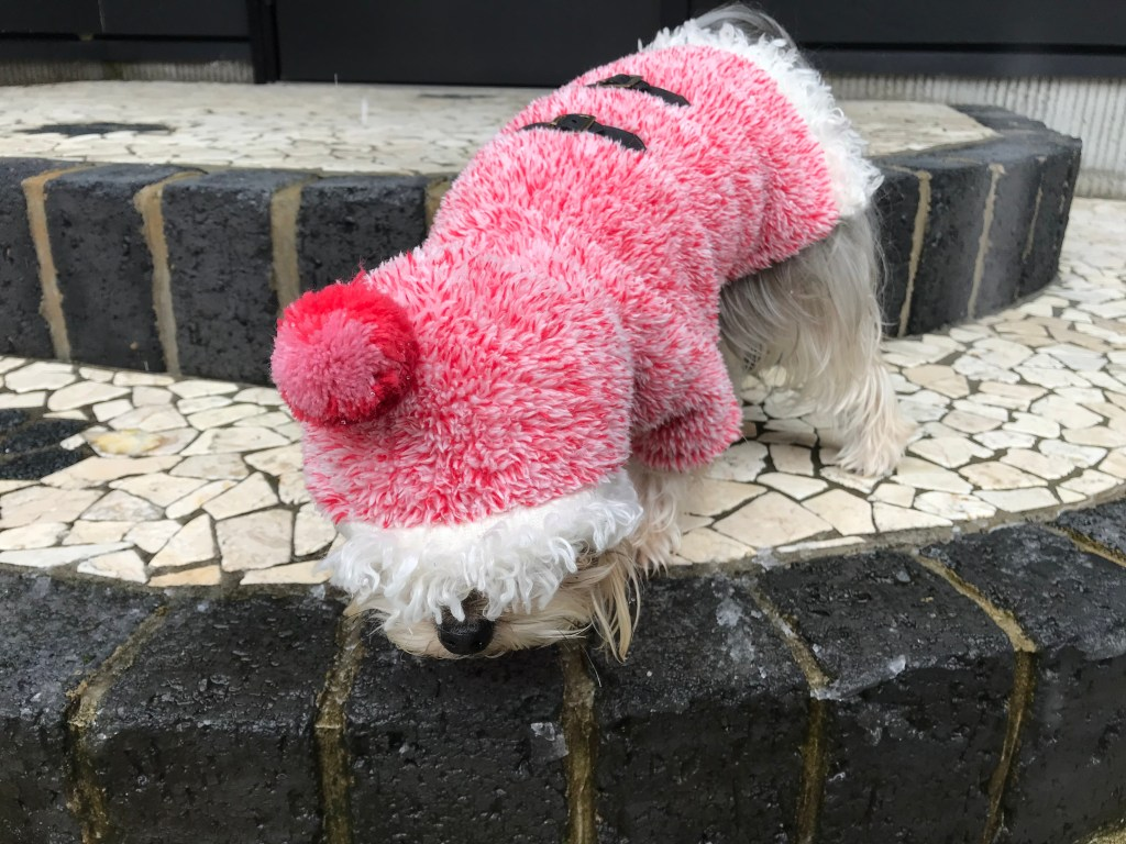 前が見えない犬