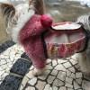 洋服と腹巻と犬2