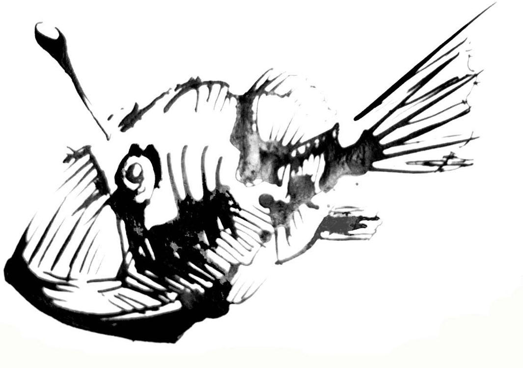 Angler Fish by carthief on DeviantArt