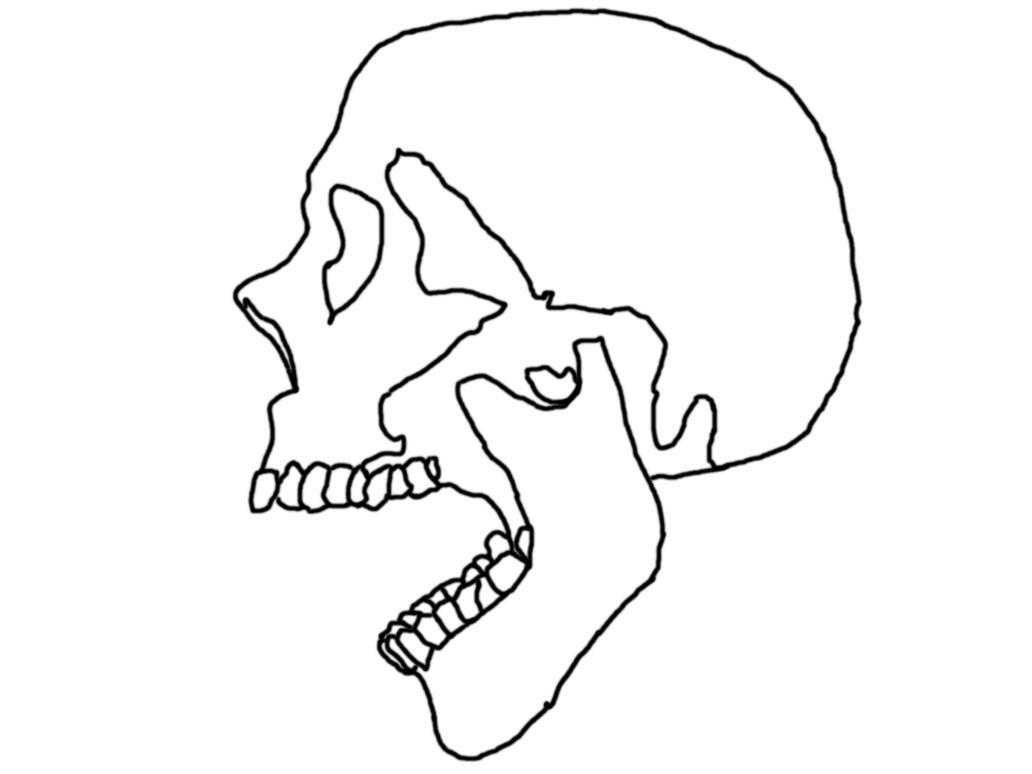 outline of skull by lkwai on DeviantArt